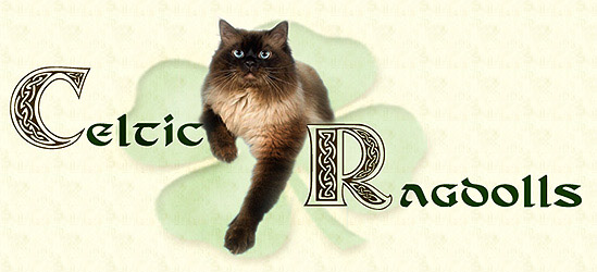 Celtic Ragdolls Top Banner